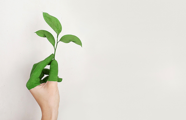 Hand holding plant. Sustainable home.