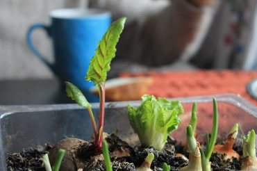 Sustainable home in Torrevieja: Grow vegetables at home.
